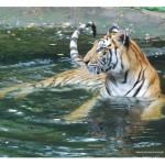 Taman Safari Malang